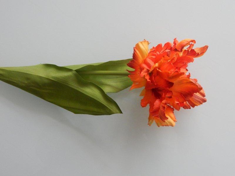 parkiet tulp oranje rood