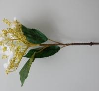 Hortensia, randbloeier wit