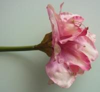 super Amaryllis roze tint