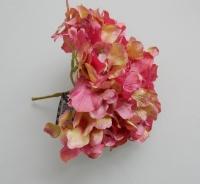 mooie hortensia toef, oud roze