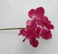 roze/paarze vanda orchidee
