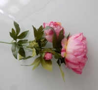 pioenen super vertakt, roze