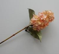 hortensia zalm, korte steel