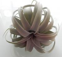 Tillandsia kunstplant grof, niet van echt te onderscheiden