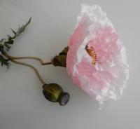 Papaver xxl licht roze