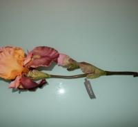 tuin Iris van Silka