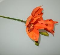 Cymbidium oranje
