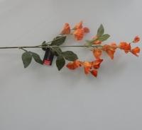 Lathyrus vertakt, oranje
