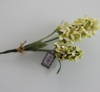 Hyacinth groen , korte steel