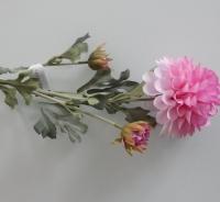 Dahlia licht roze, lange steel