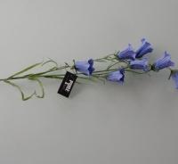 Campanula blauw