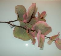 eucalytus grijs/roze grote bladeren