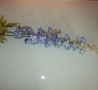 Delphinium blauw, fijne bloemetjes