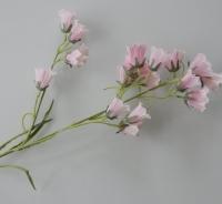 Campanula licht roze
